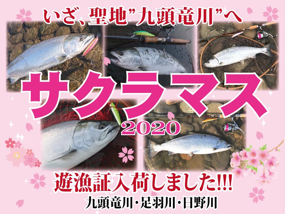 サクラマス遊漁証(日野川、足羽川、九頭竜川)入荷!!